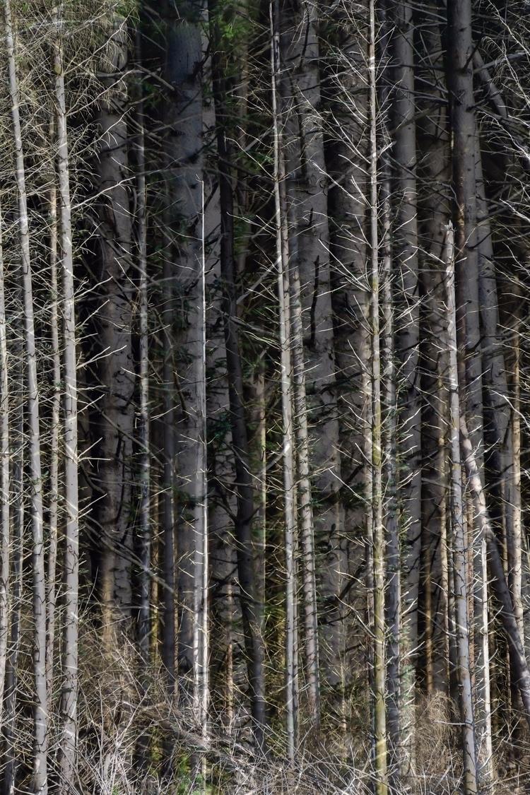 tree layers close - ellophotography - luxrevelry | ello