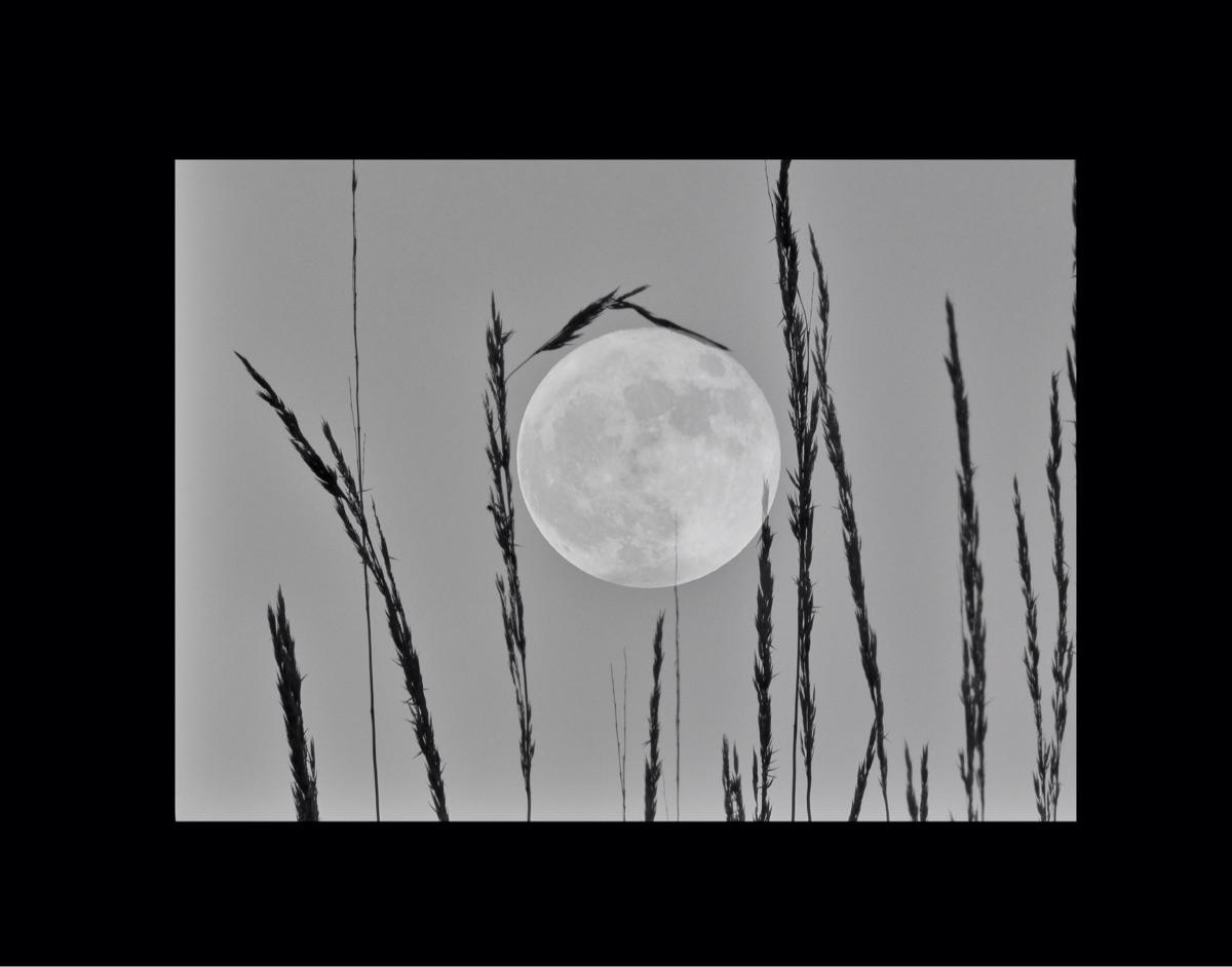 experiment. Harvest Moon. title - tehranchik | ello