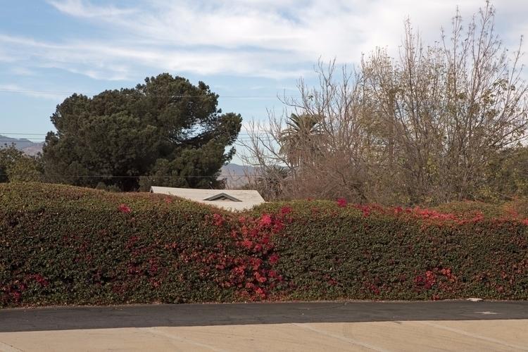 Hedge, House, Trees, Ramona Blv - odouglas   ello
