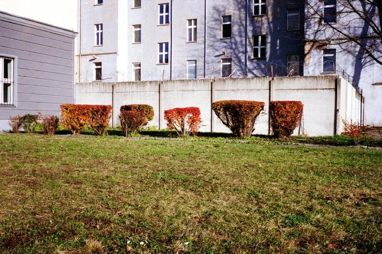 untitled (kurzhaarschnitt, rot - tinakino | ello