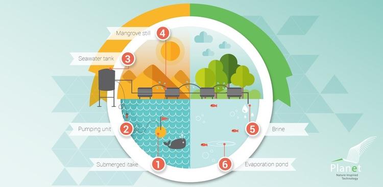 Mangrove System Infographic sho - chiaraalduini | ello