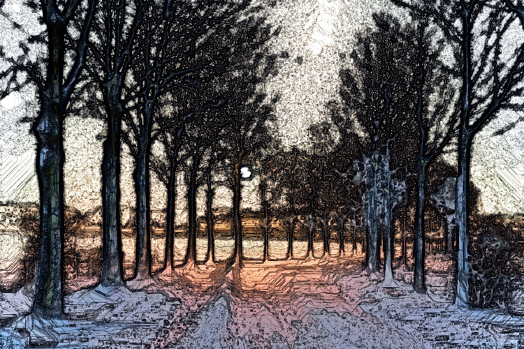 light - nature, winter, sunset, trees - jazer | ello