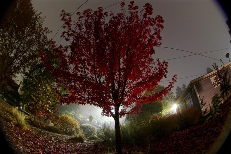 neonpherepapha Post 26 Oct 2017 00:37:37 UTC | ello