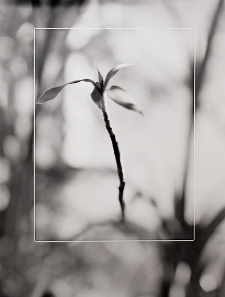 Encased Plant  - plant, blackandwhitephotography - american_print | ello