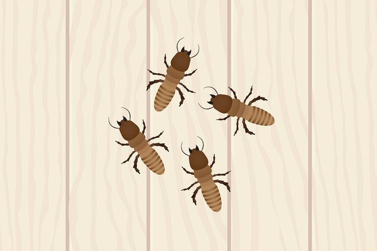 Baby Termite Site building home - babytermites | ello