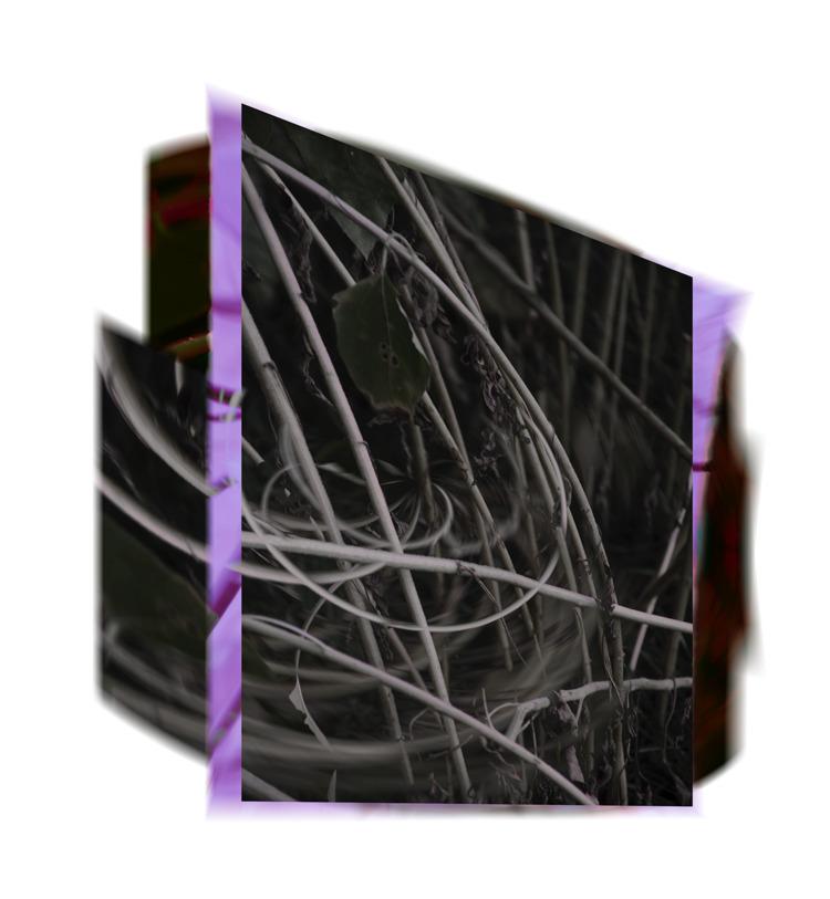 lot tangled webs leading places - talonwolf   ello