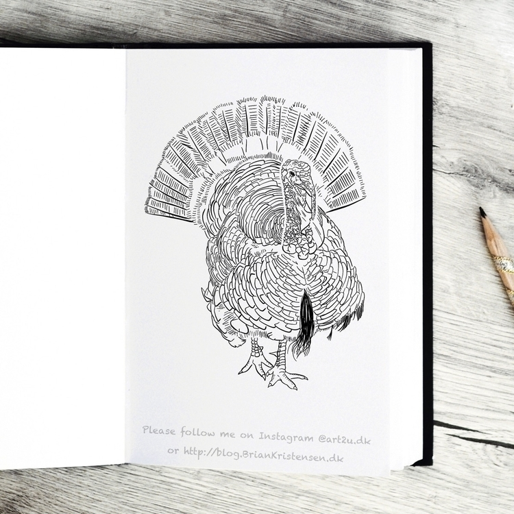 Drawing - turkey, bird - art2u | ello