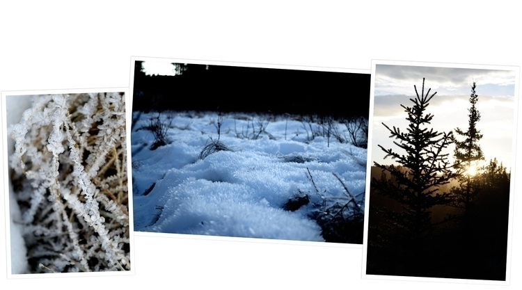 Foraging Christmas trees lot sn - camwmclean | ello