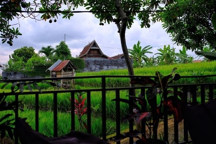 Canggu, Bali - weltfarben | ello