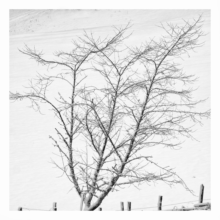 Les Bedules, -Bosque de Peloño - guillermoalvarez | ello