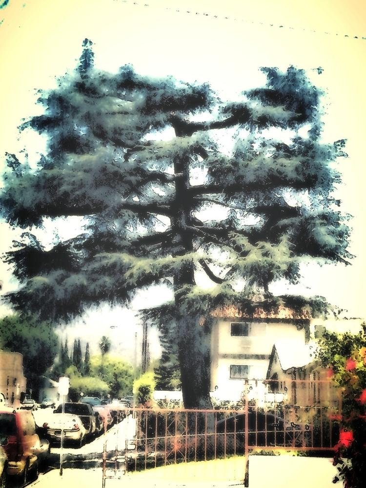 Tree. photomanipulated image - tree - sirhowardlee | ello