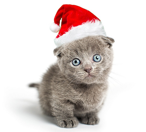 COMMENT SHARE HAPPY HOLIDAYS - snapcats - snapcats | ello