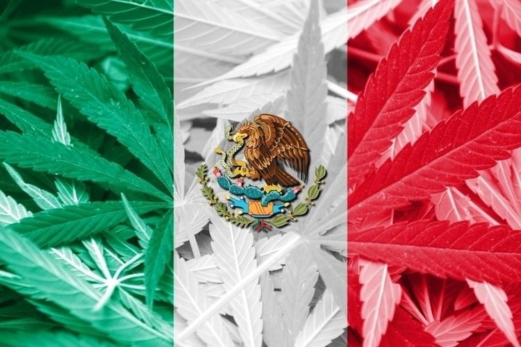 Mexican Regulators Expect MMJ A - ellocannabis | ello