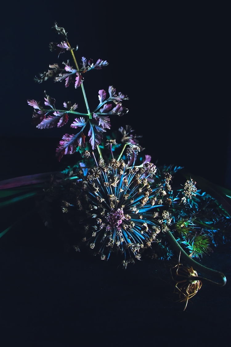 Serie Dark Flowers - flowers, photography - mphotography | ello