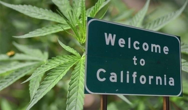 Cal NORML reminds members, tour - ellocannabis | ello
