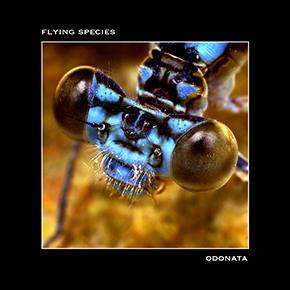 June 17th, 2017 Flying Species  - murmure_intemporel | ello