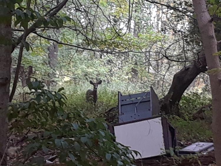 deer lord happen beautiful natu - findog2 | ello