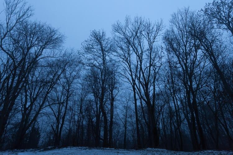 Latvian forest - photography, cityscape - anttitassberg | ello