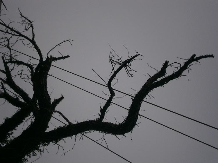 minimalist, gray, tree, pointandshoot - hic_sunt_dracones | ello