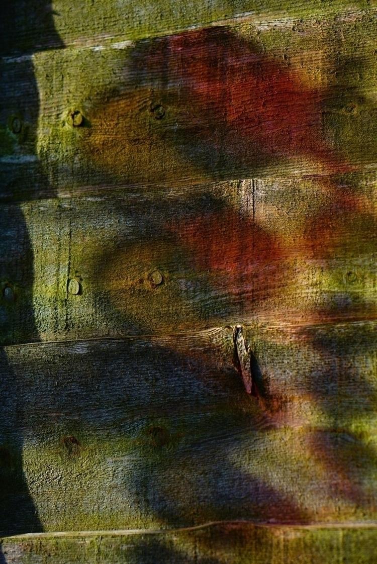 Painting fence colour. summer 2 - greyswan | ello