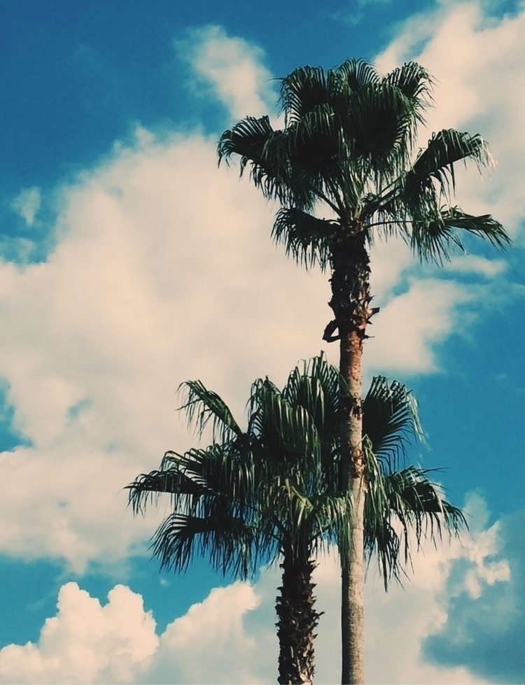 Untitled - palm, tree, clouds - exet | ello