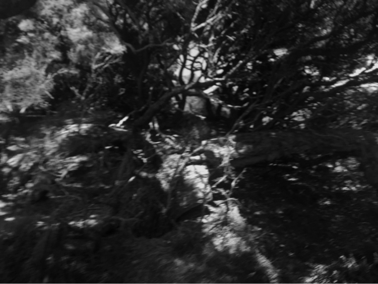 Ancient Trees Phillip Island 20 - vrenolds | ello