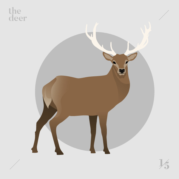 deer — Il cervo - illustration, graphicdesign - un_quinto | ello
