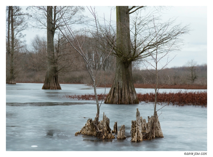 Progression - cypresstrees, nature - jascox | ello