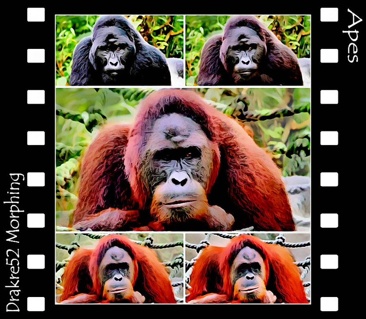 Apes Morphing. Watch film: Page - drakre52 | ello