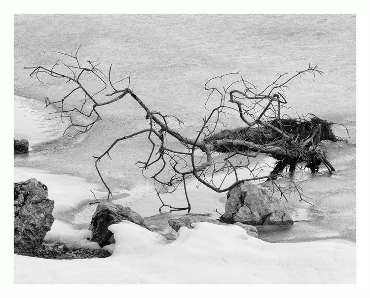 Branches frozen water - guillermoalvarez | ello