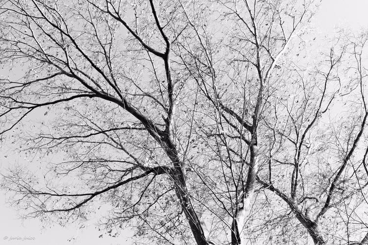 Golden winter fragments - Tokyo - juria | ello