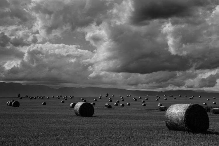 Harvest Time, Geneva, Switzerla - oliviermiche | ello