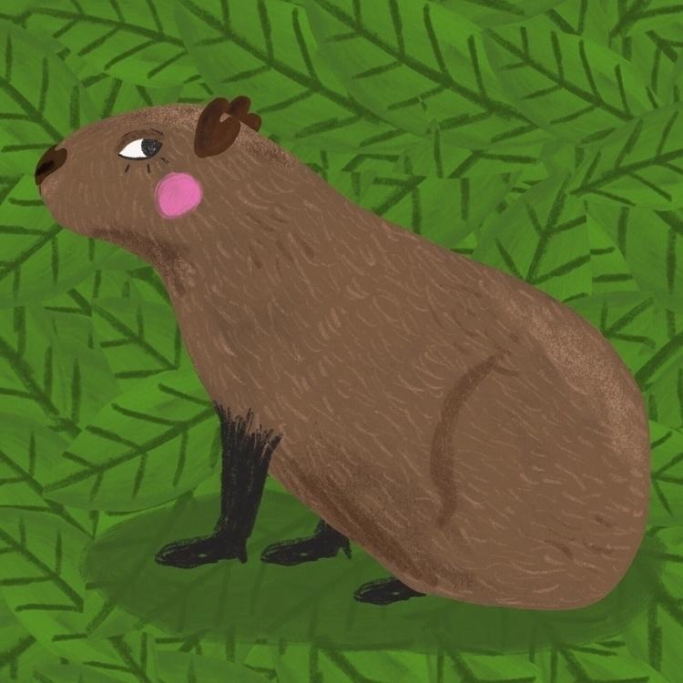 illustration, art, capybara - hattiemakesthings | ello