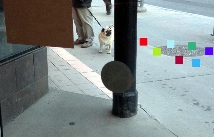 Set theory - photography, dogfocus - dispel   ello