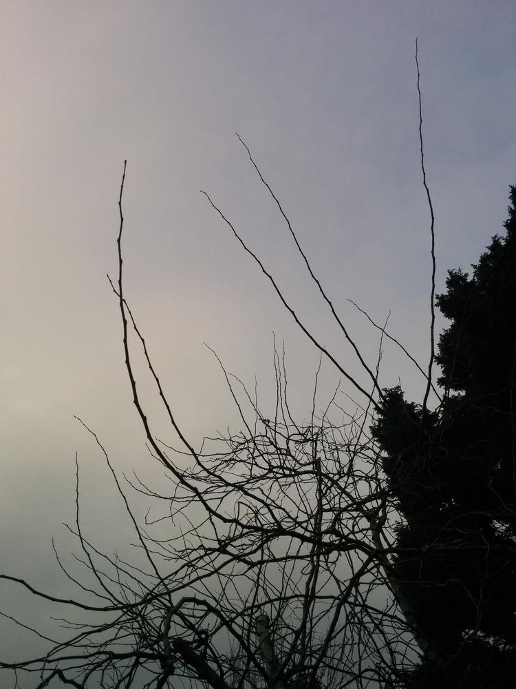 skies - tridral | ello
