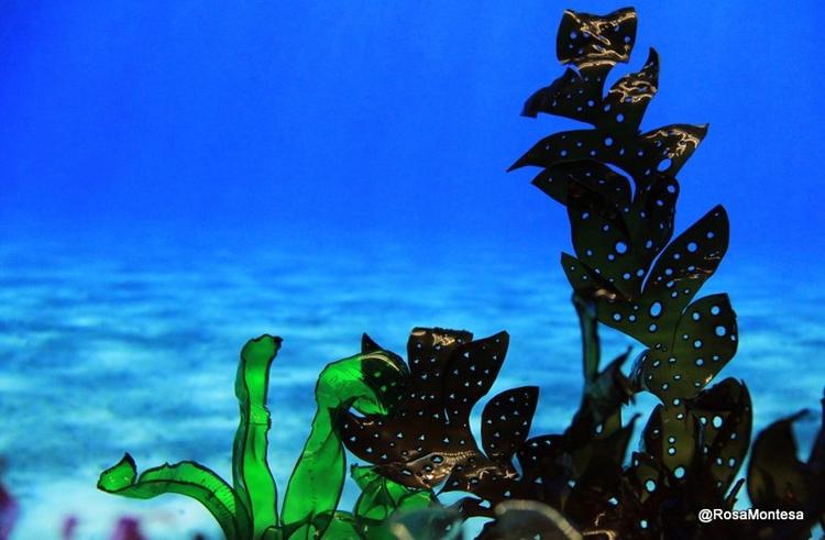 imaginary plastic sea Seaweed c - rosamontesa | ello