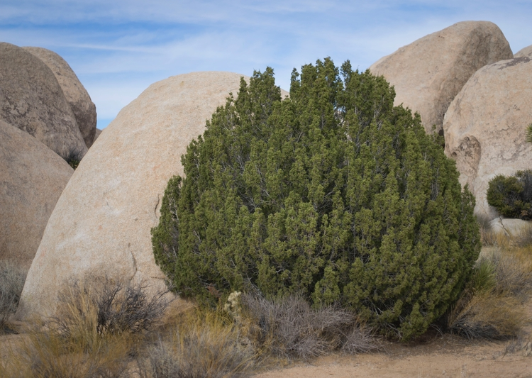 Joshua Tree Untitled Compositio - everymolly   ello