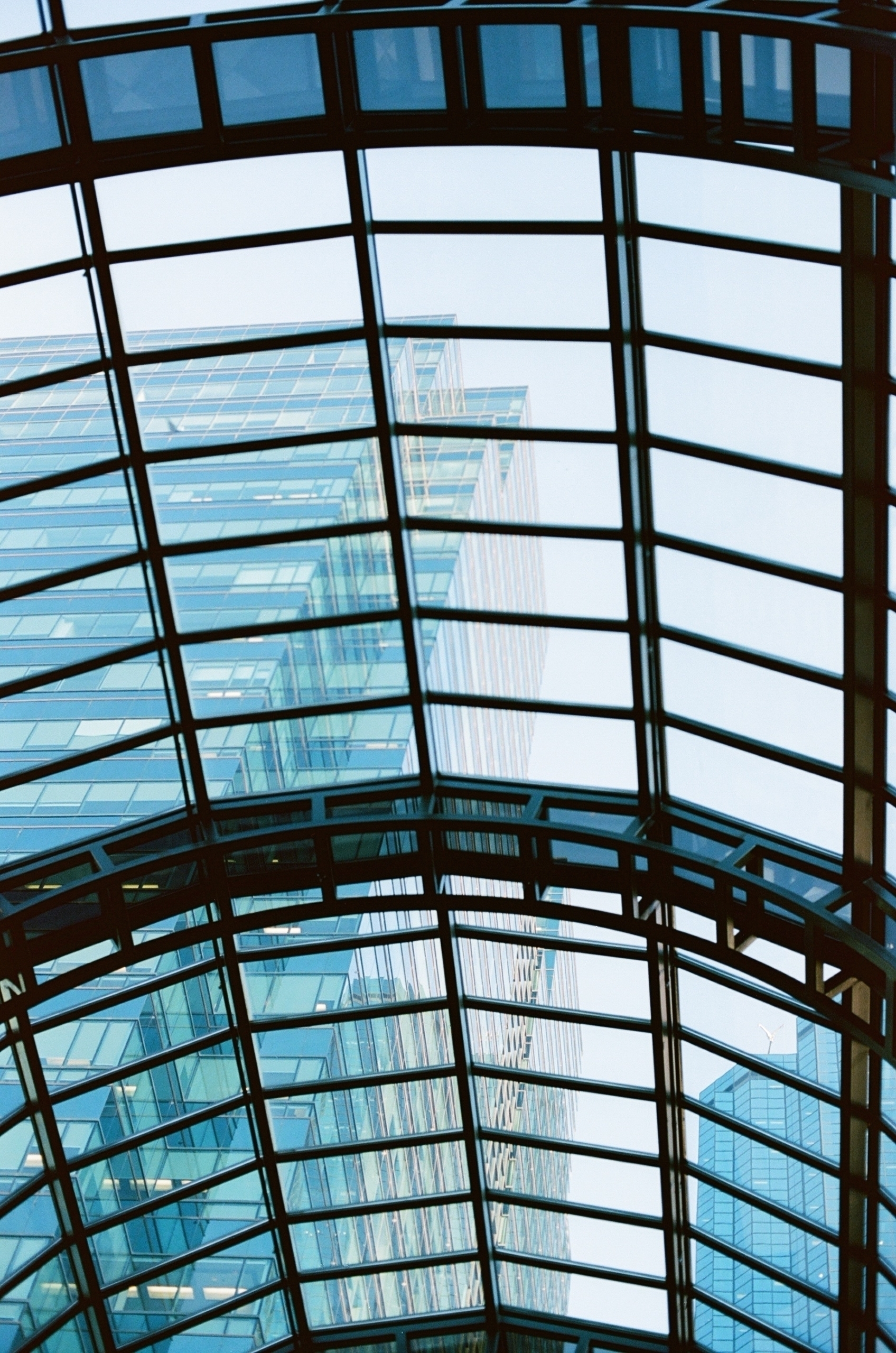 Glass Ceiling - film, filmphotography - alaskapalms | ello