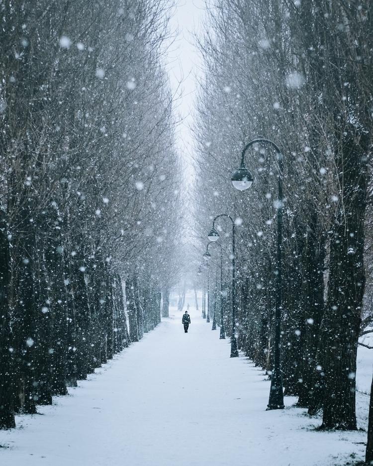 day winter - photography, snowfall - viktor-balaguer | ello