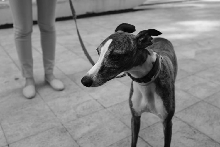 Dog - street, belgrade, serbia, bw - talexic | ello