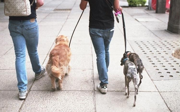 Walking dogs. Mexico City, Apri - pierreberthier   ello