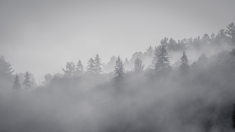 Moody misty morning Algonquin P - dokaphotos | ello