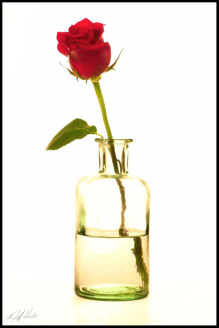 Funeral Rose flowers - highkey, rose - kudzupatch | ello