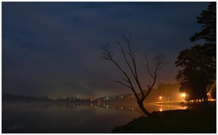 Dead tree - night, water, lake - kudzupatch | ello