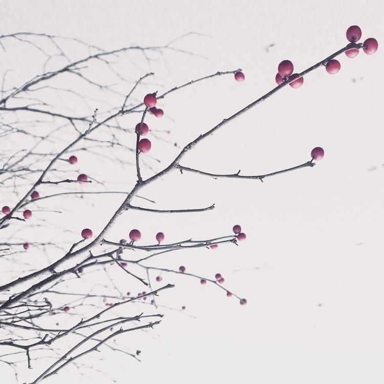 Winter tree - anamarques210376 | ello