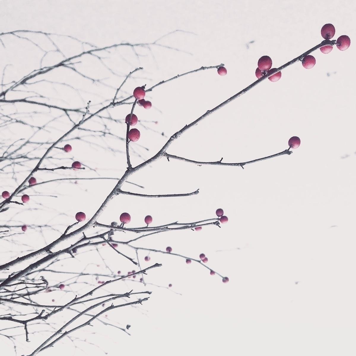 Winter tree - anamarques210376   ello