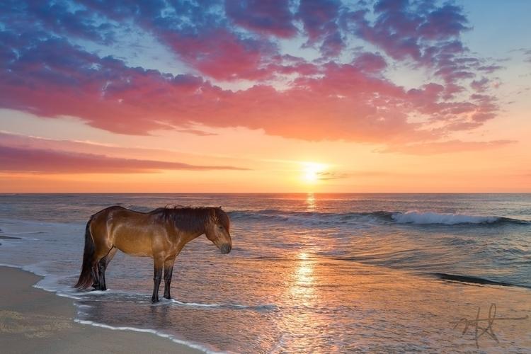 Wild horse sunrise surf Assatea - mrickard5 | ello