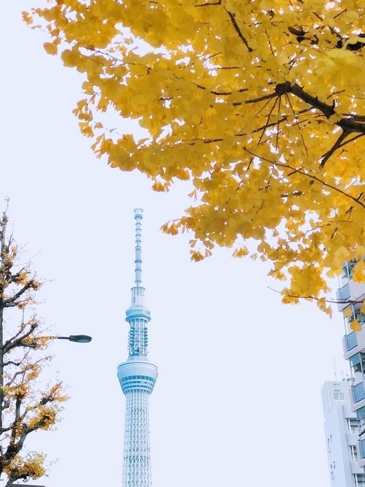 Catch autumn - yellow, skytree, tokyo - itinglee | ello