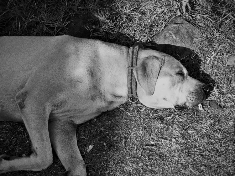 sleepy dog 2018 - snap, snapshot - blacktravis | ello