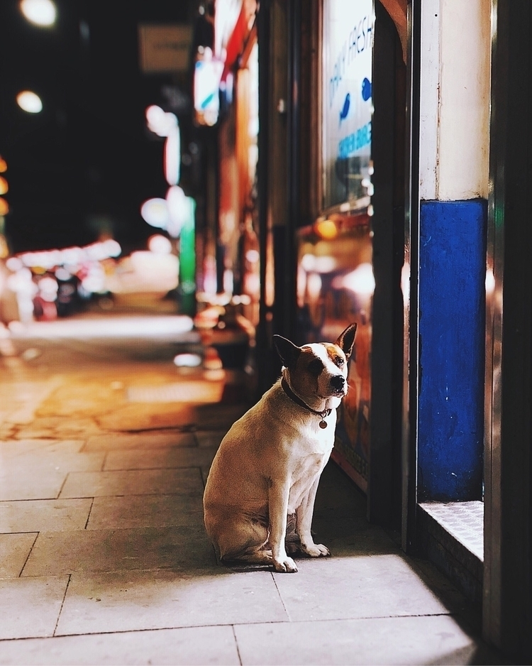 Dog waiting chippy entrance / С - gn0me | ello